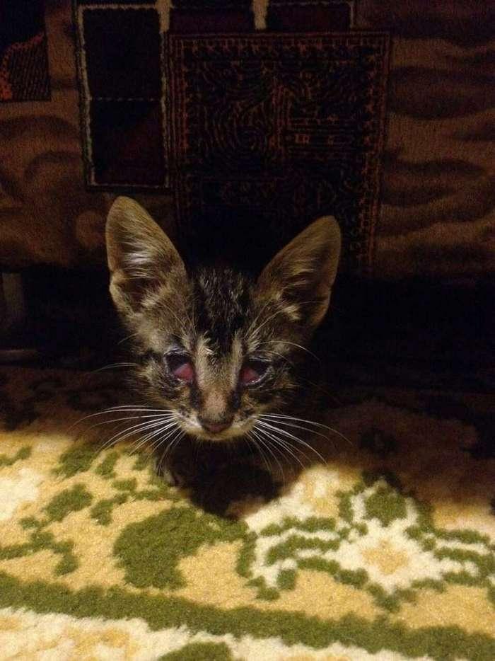 Она увидела в траве маленький комочек, который искал себе еду (7 фото)