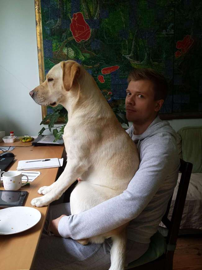 15 котов и собак, которые жить не могут без своего человека