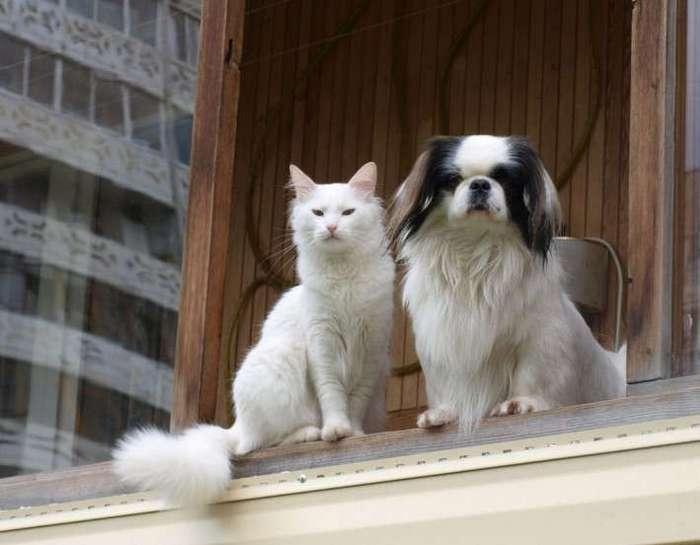 Как кошка с собакой! (36 фото)