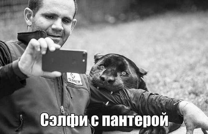 Прикольные картинки (86 фото)