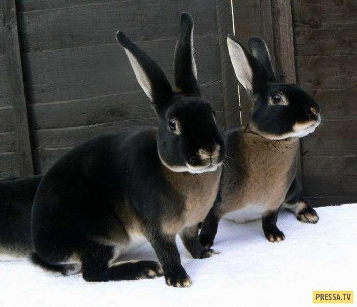 Симпатичные и позитивные животные (20 фото)