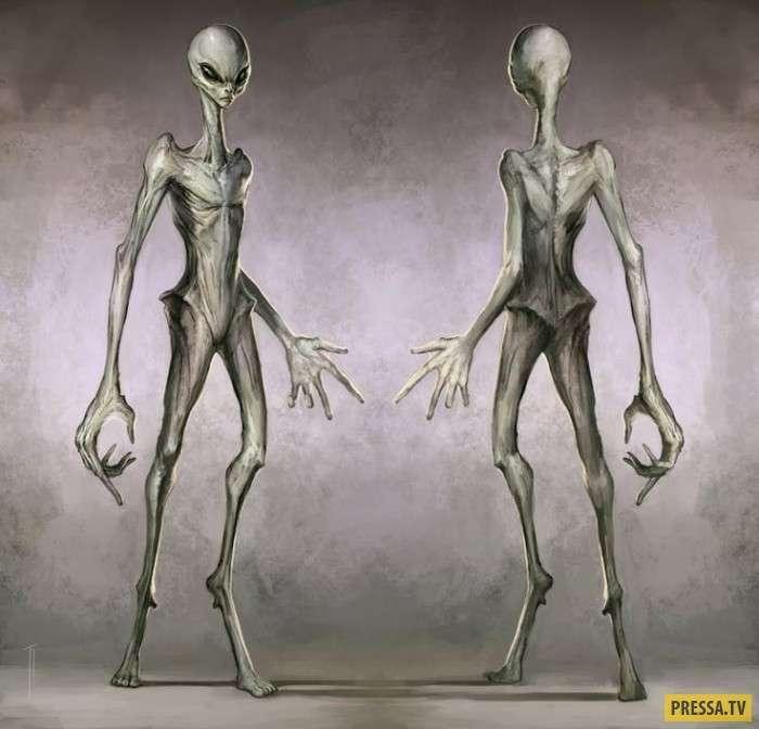 Как выглядят инопланетяне (5 фото)