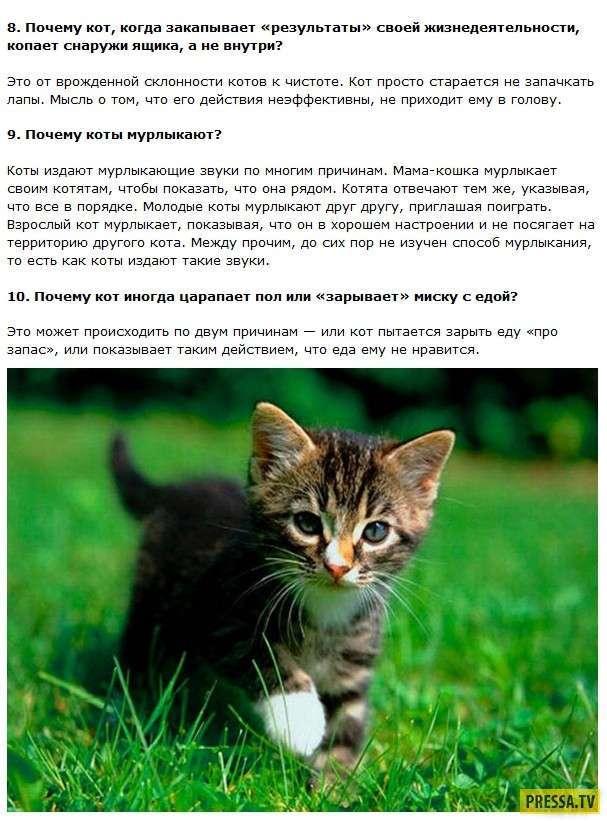 ТОП-24 интересных и познавательных факта о кошках (11 фото)