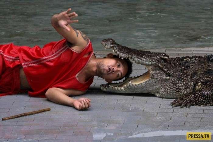 Ферма Шри-Аютайя по выращиванию крокодилов в Таиланде (21 фото)