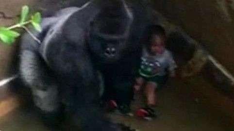 ТОП-15 диких историй о том, как люди в зоопарке полезли к хищникам (15 фото)