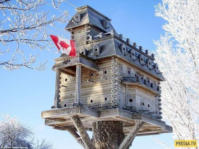 Канадский пенсионер строит роскошные виллы для птиц (11 фото)