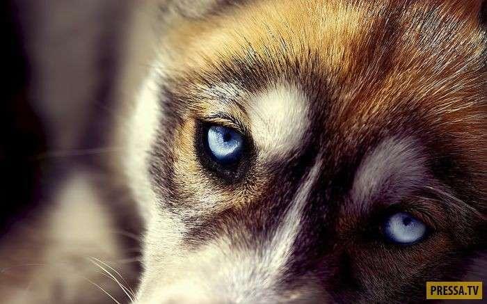 Уникальные особенности собак