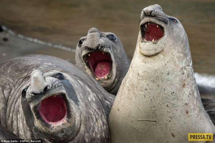 Забавные звери на конкурсе Comedy Wildlife Photography Awards 2017 (15 фото)