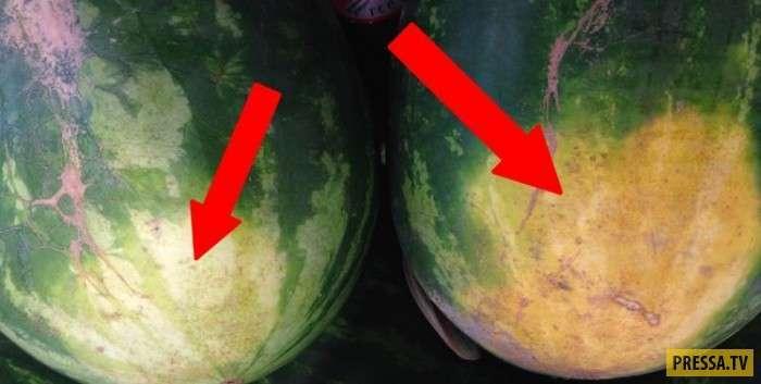 ТОП-5 советов как выбрать самый сладкий арбуз (4 фото)
