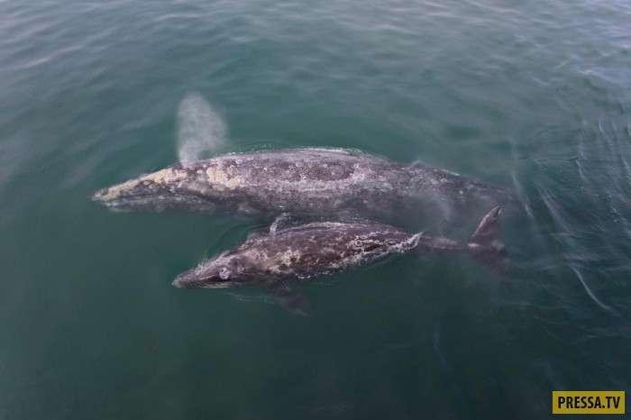Туристы гладят китов (16 фото)