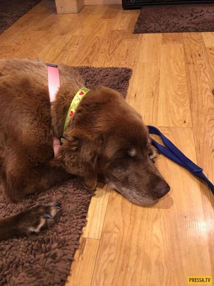 Собака, заблудившаяся в горах, спустя 9 месяцев вернулась к хозяевам (3 фото)