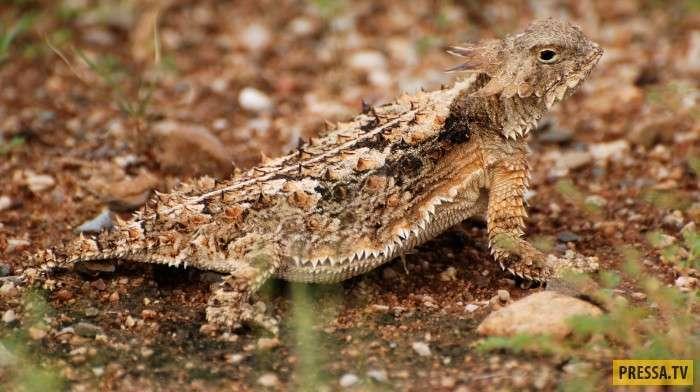 ТОП-16 животных с удивительными и необычными способностями (16 фото)