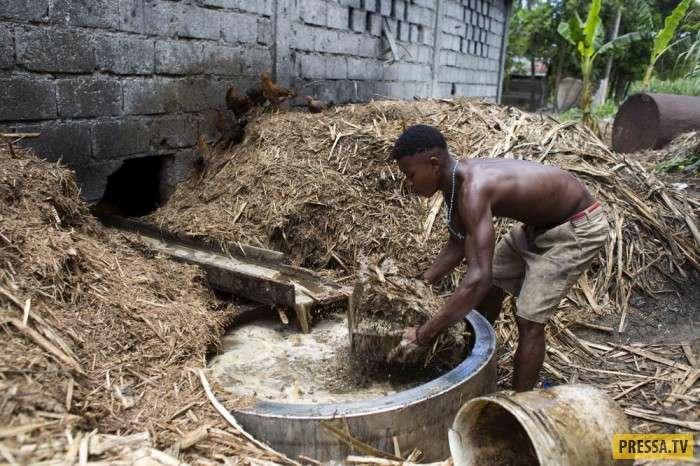 Самогонщики Гаити (20 фото)