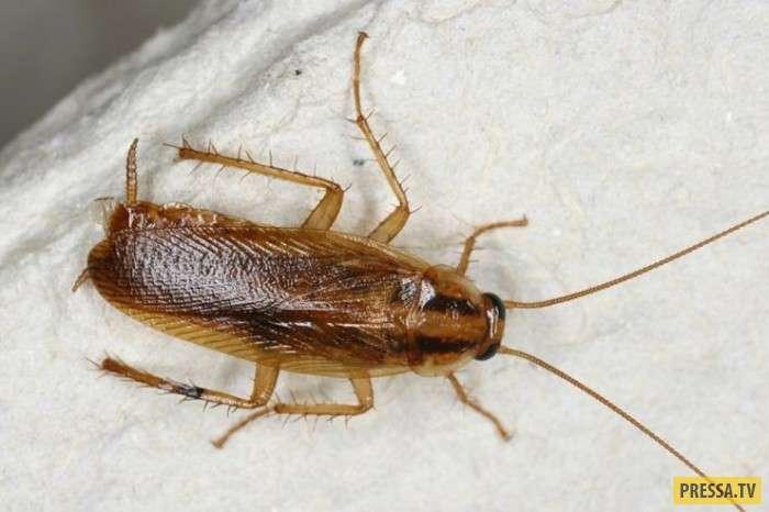 ТОП-10 удивительных и познавательных фактов про тараканов (10 фото)