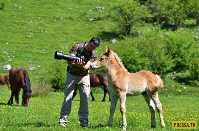 Забавные фотографии диких животных и фотоохотников (46 фото)
