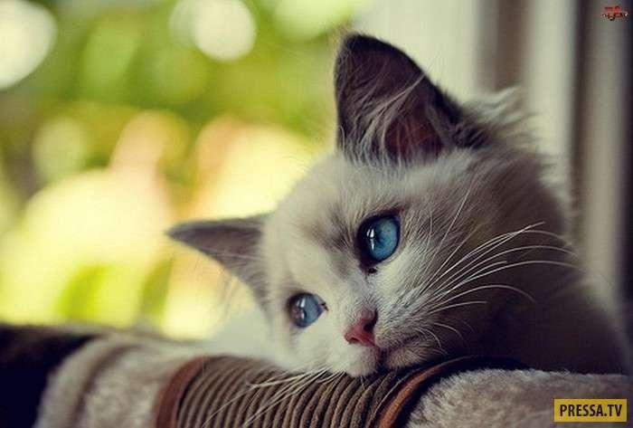 К 16 годам тюрьмы приговорен кошачий убийца (фото )