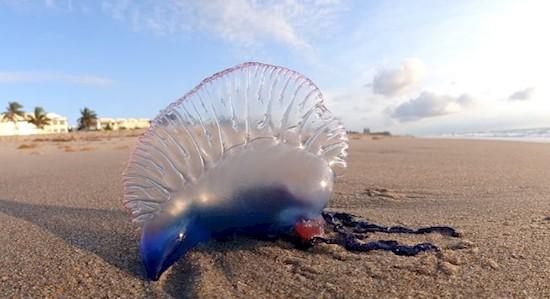 Смертельная красота на пляжах Средиземного моря (10 фото)