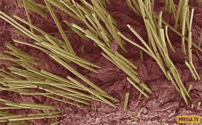 Виртуальная экскурсия по человеческому организму: фотографии органов под электронным микроскопом (18 фото)