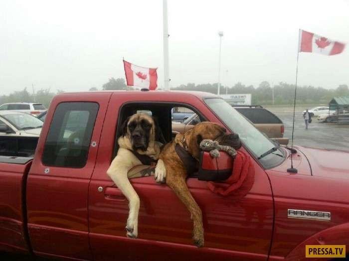 Тем временем в Канаде (35 фото)