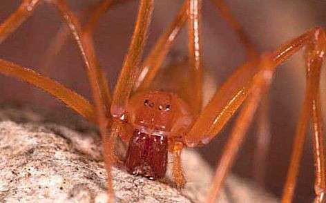 ТОП-10 ужасных пауков, открытых в 21 веке (6 фото + 4 видео)