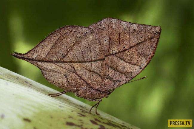 ТОП-10 бабочек удивительной красоты (10 фото)