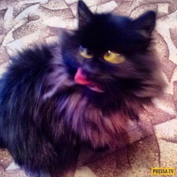 Коты, которым явно нужен экзорцист (16 фото)