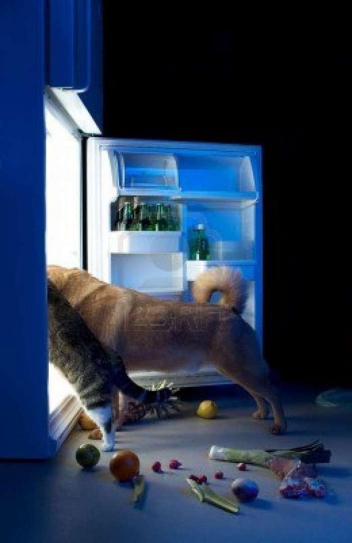 Что там в холодильничке (19 фото)