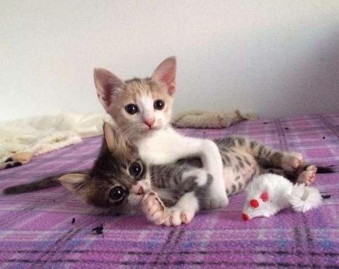 Он всеми силами боролся за жизнь, и помогали ему две его спасенные сестрички! (16 фото)