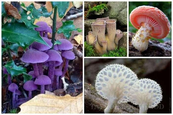 Невероятные, абсолютно сумасшедшие грибы (36 фото)