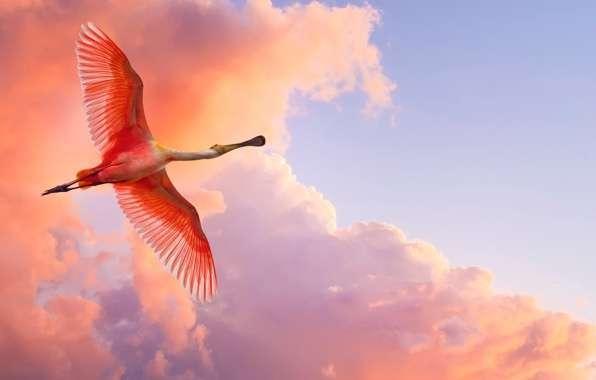 12 символов из ваших снов, которые нельзя игнорировать