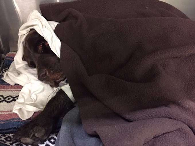 Собака, пропавшая без вести, через месяц нашлась в колодце за полмили от дома (5 фото)