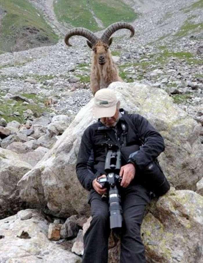 30 фотобомб, главными героями которых стали животные (29 фото + 1 гиф)
