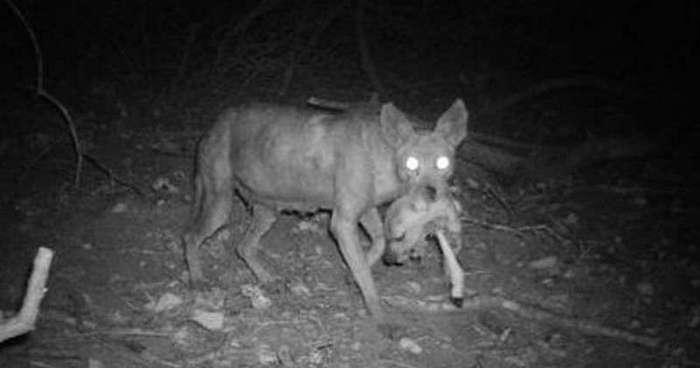 15 пугающих снимков неизвестных существ (14 фото + 2 видео)