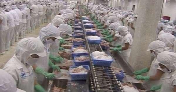 Никогда не ешьте эту рыбу: она ОЧЕНЬ опасна! (3 фото)