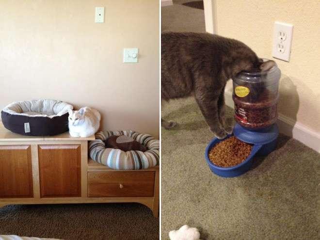Коты лучше хозяев знают, как использовать их дорогие подарки (22 фото)