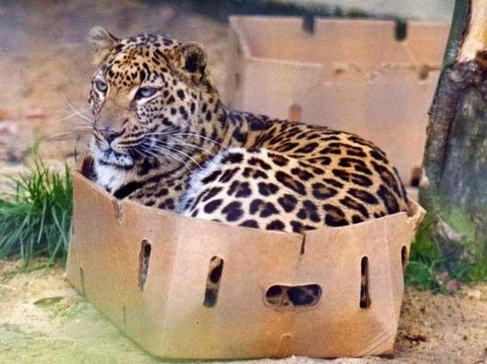 почему коты так любят коробки создается