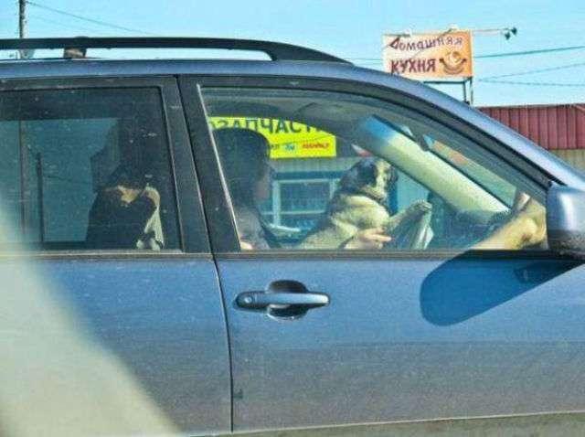 Эти люди явно ничего не слышали о технике безопасности (36 фото)