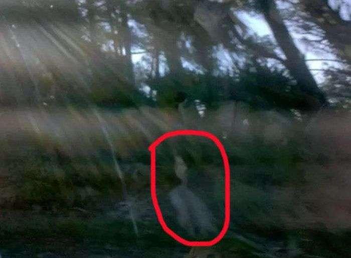Фото с призраками (15 фото)