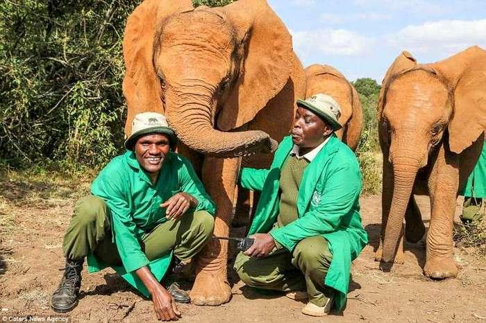 Осиротевшая слониха целует мужчину, спасшего ее от смерти (16 фото)