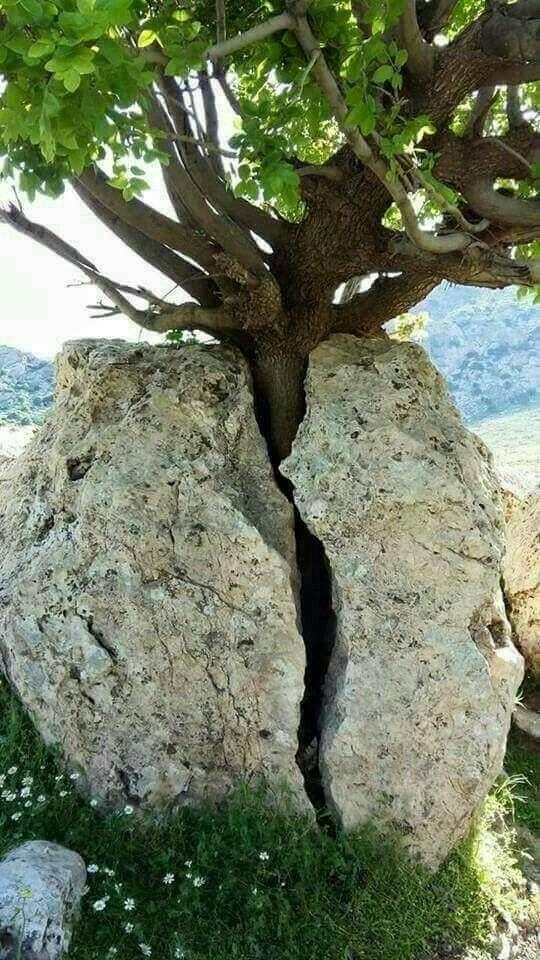 Жажда жизни и великая сила природы (22 фото)