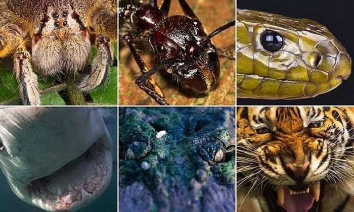 Фотографы подошли к этим страшным хищникам так близко, как вы бы никогда не рискнули! (22 фото)