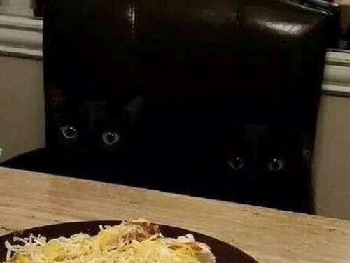 Чёрные кошки — настоящие мастера маскировки (10 фото)