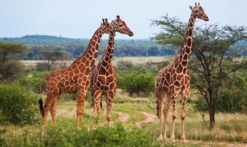 Топ-10: удивительные преимущества животных над людьми