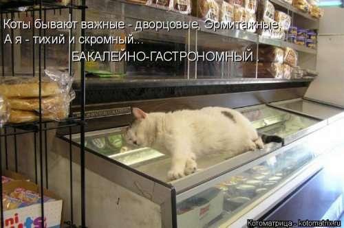 Новая котоматрица (21 фото)