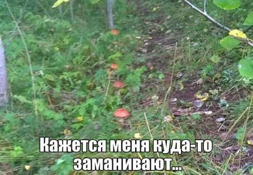 Фото-приколы и картинки, ржака (30 шт)