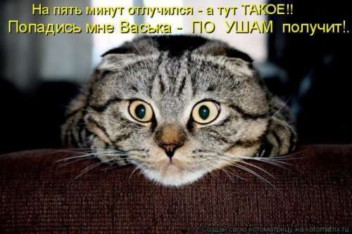 Свежая котоматрица для хорошего настроения (32 фото)