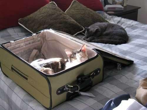 Домашние питомцы, которые хотят в отпуск вместе с хозяевами (17 фото)