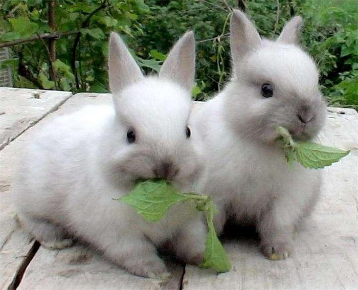 Наши любимые кролики: интересные факты (3 фото)