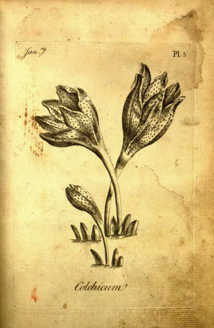 Как выглядит первая раскраска для взрослых 1760 года выпуска (17 фото)