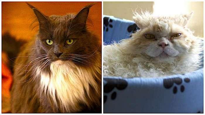 Мы многого не знаем о кошках (7 фото)